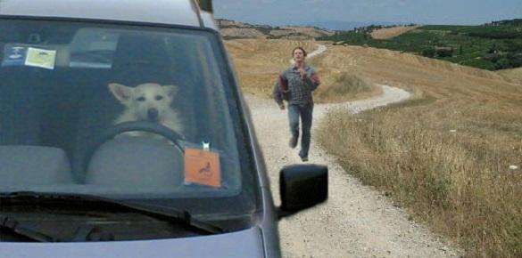 Cane abbandona padrone. Ritorna a casa dopo 3 settimane