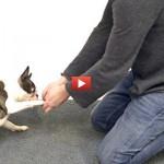 Ecco come reagiscono i cani alla magia (2° PARTE)