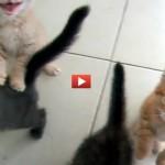 Quattro tenerissimi gattini reclamano la cena: il video che vi farà innamorare di tutti loro!