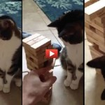VIDEO INCREDIBILE: gatto gioca a Jenga!