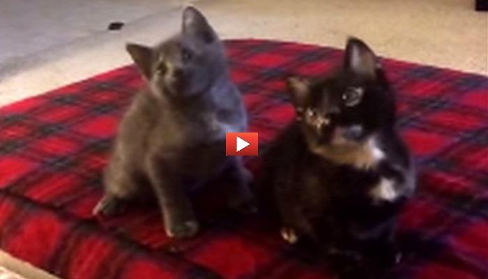 Due gattini a ritmo di musica!