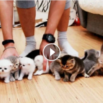 Fare una foto di gruppo a 10 gattini è impossibile! [VIDEO]